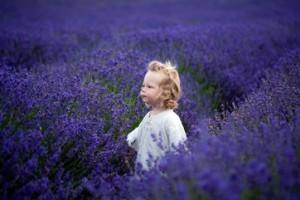 lavender-benefits